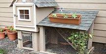 Chickens & Chicken Care