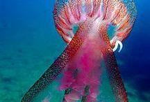 Amazing Creatures / Nature's wonderful creatures! :)