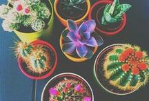 Flowers ^^