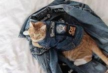 Kitties / Cats we love. Rock cats, metal cats, cute cats, battle jacket cats