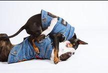 Pethaus Gear / Our awesome dog clothing, battle jackets,dog hoodies, dog jackets, dog vest, denim dog vests. Rock dog clothes, Metal dog clothes and more