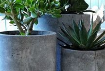 Landscaping / Garden ideas for when our house is built