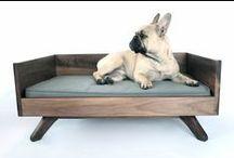 Pet Interiors / Willies fav spaces & furniture