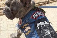 Our Pethaus Pack Members - denim for dogs / Pawsome dogs from all around the world who have joined our Pethaus Pack.  Dogs wearing rad denim