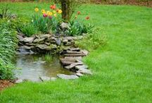 pond & pool / water will bring a new life into your garden...