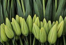 fiori.verde