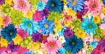Flowers / All kinds of flowers!