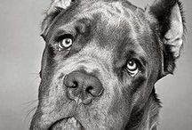 Dogs I Want / I want a dog. Like really bad.  / by Danielle Brady