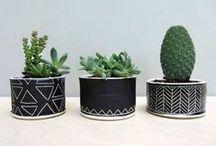 Concrete & Cacti