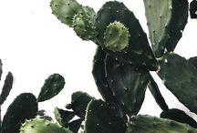 [ G R EE N ] / ★ plants ★