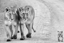 Beautiful Animals / by Stephanie Mitchell