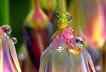 KWIATY - RÓŻNE / kwiaty - lilie
