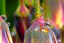KWIATY / kwiaty - lilie