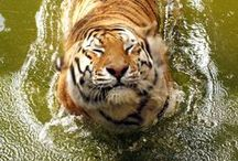 Animals / Awesome photos that I found internet.