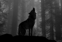 Wolves / by Shell Carpenter