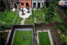 We Heart Brooklyn / Brooklyn Gardens and NY native plants