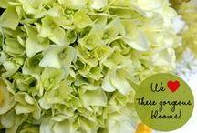 Freshness Tips / Cut flower care tips