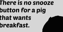 Swine Cards - Mini Pig E-Cards / Swine Cards - Mini Pig E-Cards