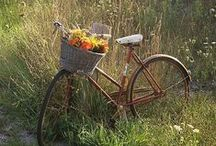 Pedal Pusher / It's just like riding a bike. It all comes back to you. / by Melody Dickson