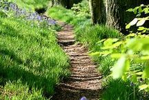 "Choose Your Path / ""If you don't choose your path, life will choose it for you."" / by Melody"