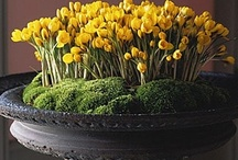 INTERIORS | Flowers / Bouquets, flowers, fleurs
