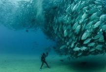 Habitat aquático!