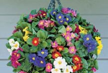 We Love Hanging Baskets / Hanging Baskets are a stunning addition to your space, whether hung on the door step or as a feature in your garden, and can be used all summer long! Here's a few - from the bizarre to the beautiful - that we thought we would share!