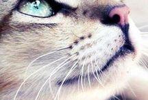 Purr meow purr