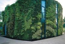 We Love Living Walls / Living walls don't just look amazing, they have environmental, social and economic benefits as well. From improving air quality and reducing the amount of heat lost from a building to increasing biodiversity by providing food and shelter for wildlife and increasing infiltration and storage of rainwater through their root systems. Pretty clever! Here are a few living walls we liked... / by Simpsons Garden Centre