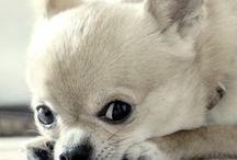 ANIMAL RESCUE | Do Good / ANIMAL RESCUE | Do Good