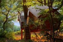 Tree Home / Living in the trees.... / by Tracy Ferguson