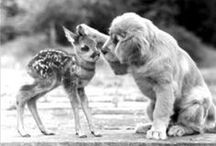 Animal Friends (Interspecies) / by Muffy2s