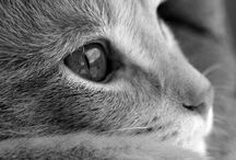 Cats <3 / Adorable cats ❤️