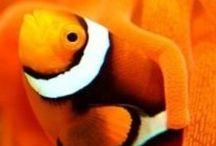 Color - Orange / Kleur palet oranje