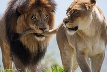 Big Cats / by Laura Farris