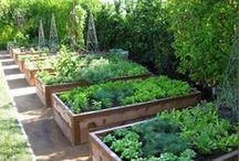 Edible Garden Ideas / Looking for ideas to create your own edible garden?. Here are some ideas to inspire your thoughts. #ediblegardenideas