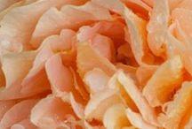 Apricot & Peach Hues