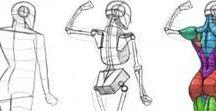 Body - Anatomy - Muscles