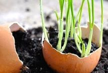 Beginner gardeners / Heaps of safe and sustainable hints, tips and ideas for the practising beginner gardener. Everything you need to know is here on this board.