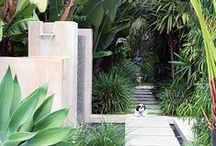 Tropical Gardens / Lush Tropical Garden Ideas. I love the colours and variety of foliage plants available to create this type of garden theme.