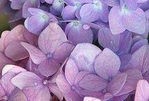 Lilac & Soft pinks
