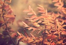 Seasons in peach hues