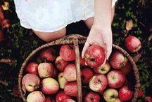 An abundance of apples