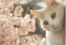 Cute animals  / All cute animals. Mostly cats cuz I love cats :)  / by Khadijah Clemente