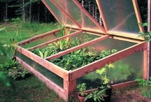 Green Houses & Cold Frames / by kelsey spear