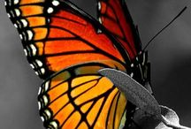 Les papillons
