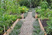 GARDEN – kitchen-garden