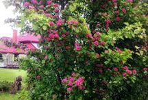 GARDEN – my garden