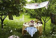 Lovely picnic / Picnic set up