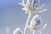 снег*snow, snowfall*зима*winter, wintertime* cold winter / Морозная и снежная, для кого-то долгожданная, а кем-то не очень любимая, но бесспорно – прекрасная. ..